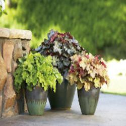 Çiçekli Yapraklı Saksı Bitkileri